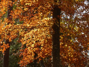 fall home maintenance- remove leaves