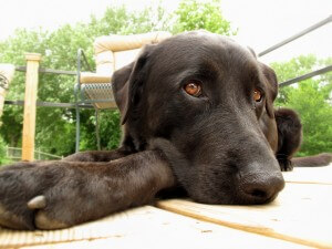 dog on stained deck